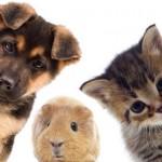 Tierarztpraxis Dr. Haverkamp Herne